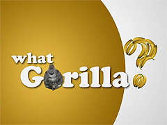WHAT GORILLA?