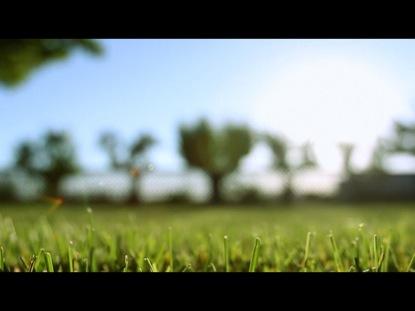 GRASS LOOP