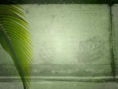 PALM SUNDAY LOOP 02