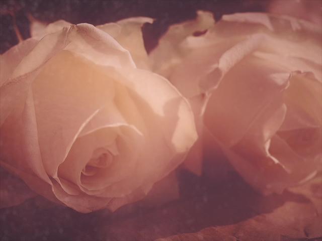 ELEGANT FLOWERS 02
