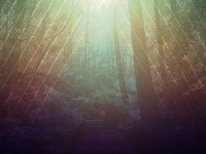FALL FOREST 02