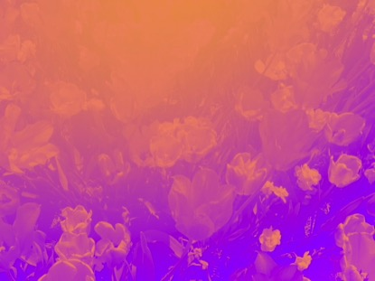 RADIANT GRADIENT FLOWERS 03