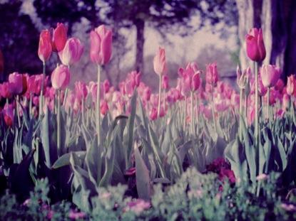 SPRING FLOWERS 8