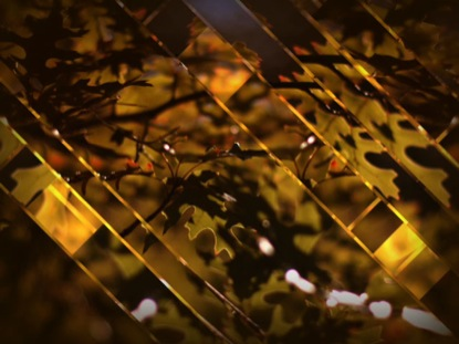 LEAVES AND GLASS