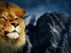 LION FACE CLOSE LOOP