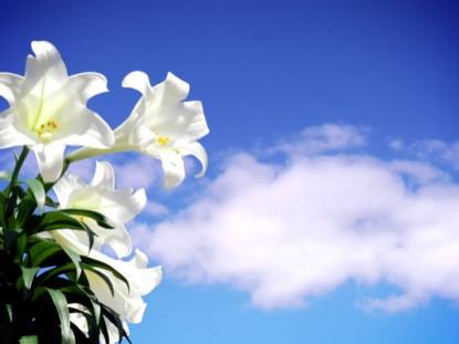 EASTER LILY SKY CLOUDS