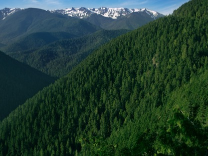 MOUNTAIN PINES VALLEY