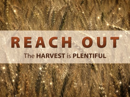 REACH OUT WHEAT