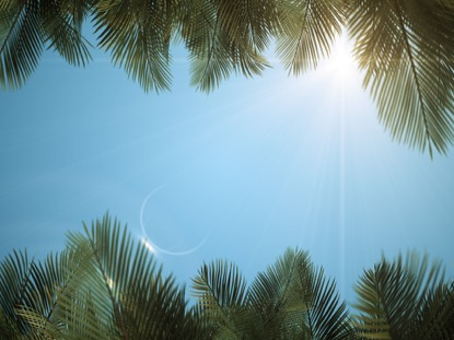 SKY VIEW PALM BRANCHES BLUE SCROLL