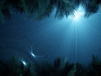 SKY VIEW PALM BRANCHES NIGHT