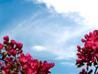SPRING BLOOM PINK FLOWERS