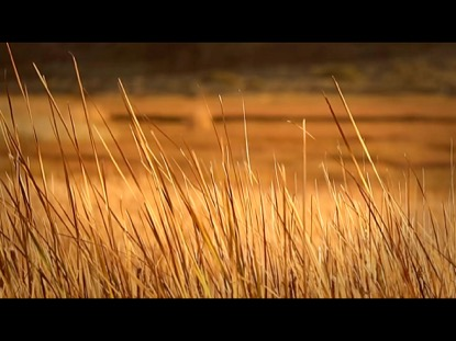 DRY BLOWING REEDS IN THE WIND