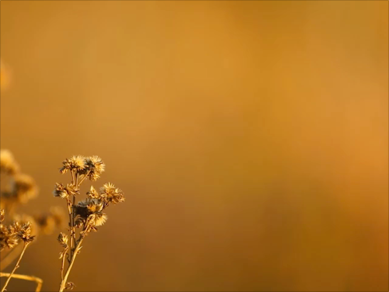 ORANGE DRY FLOWER WITH SHALLOW FOCUS