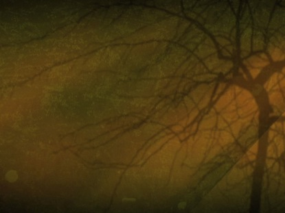 AMBER TREE LIMBS