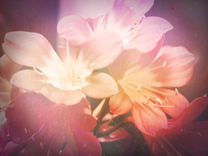 FLOWERS FOR MOM 1 MOTION