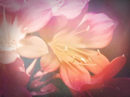 FLOWERS FOR MOM 3 MOTION