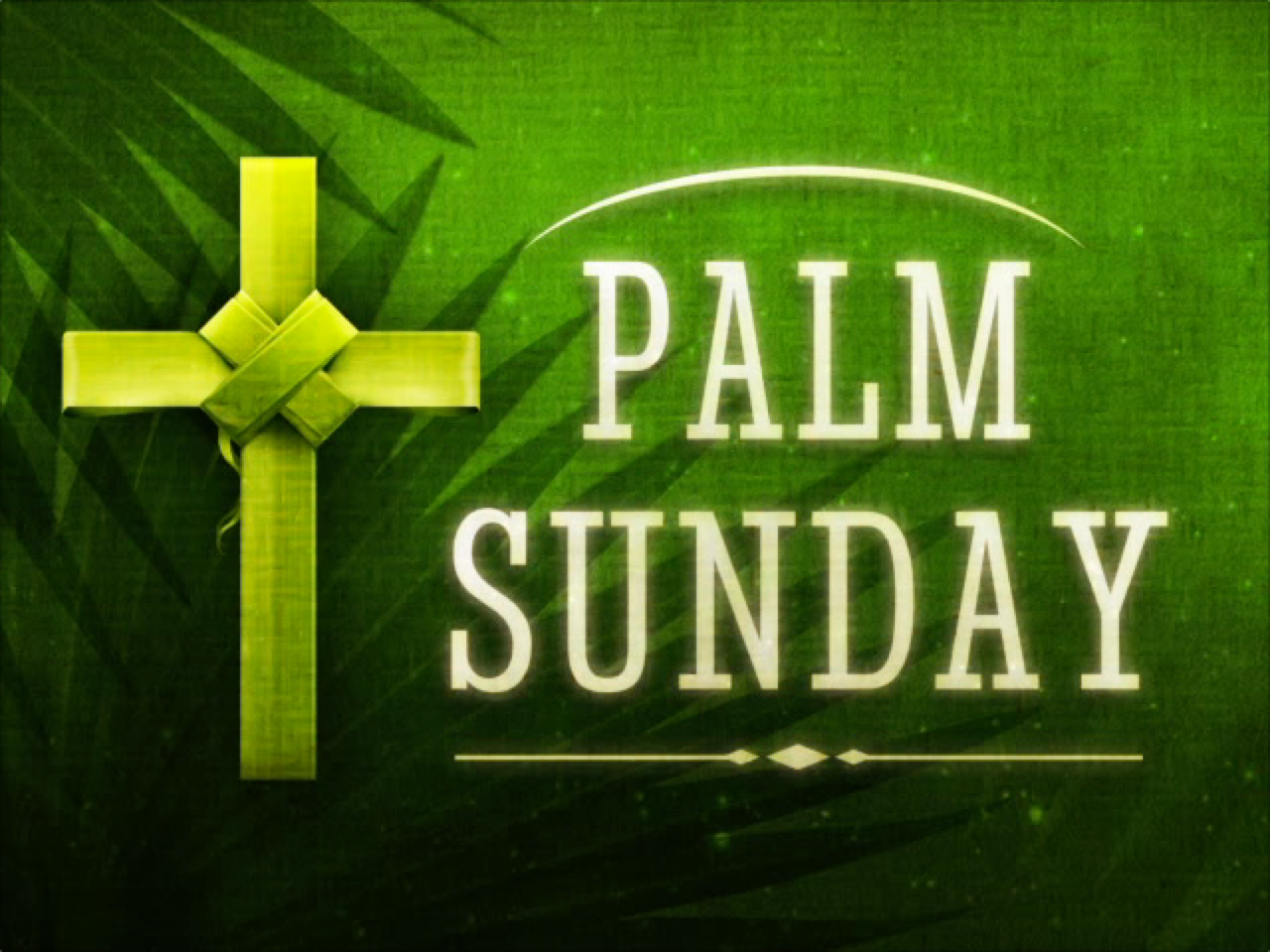 HOLY PALMS MOTION 1