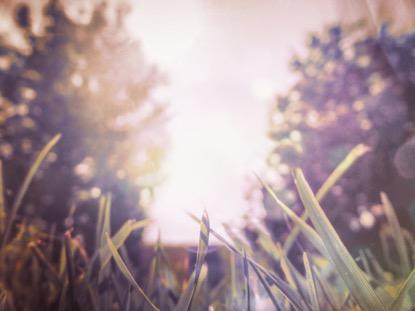 SUNLIT GRASS 2 MOTION
