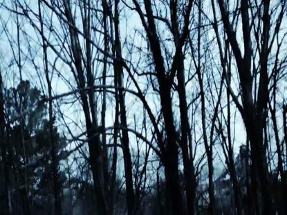 TREE GRUNGE COOL