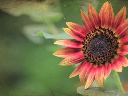 GRUNGE FLOWER 3