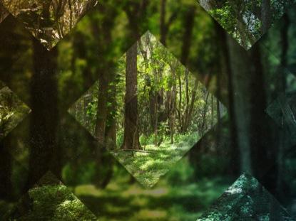 FOREST DIAMONDS