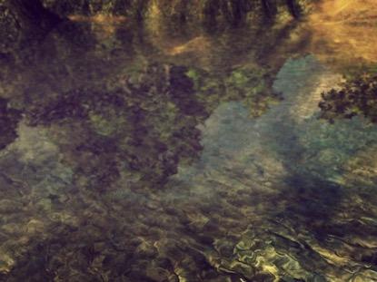 VIVID REFLECTIONS