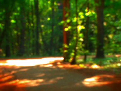 FOREST PATH 2
