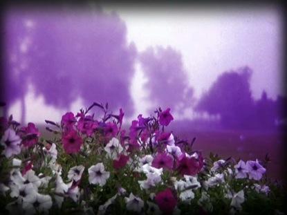 FOG FLOWERS