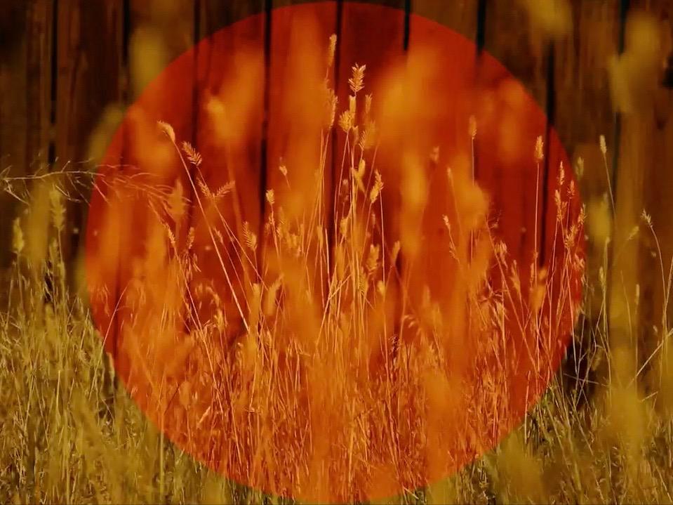 AUTUMN TALL GRASS