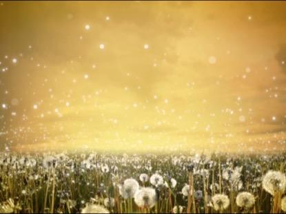 DANDELIONS SUMMER WORSHIP MOTION