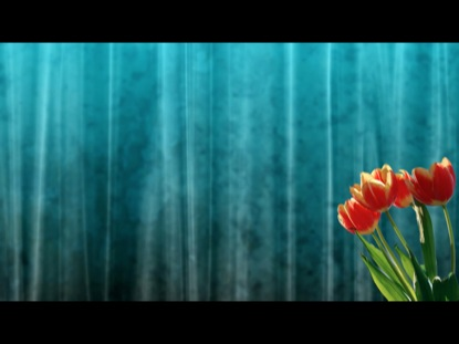 EASTER SPRING TULIPS MOTION