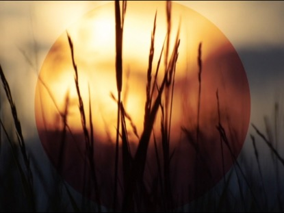 SUMMER SUNSET TALL GRASS