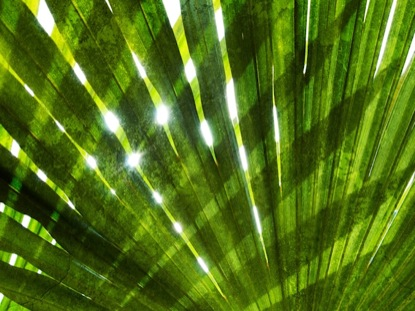 PALM SUNDAY BACKGROUND 2