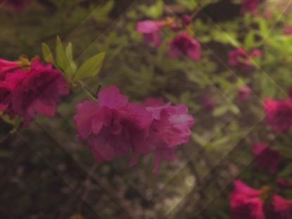 FRESH FLOWERS PINK