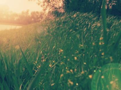 GRASSY NASHVILLE