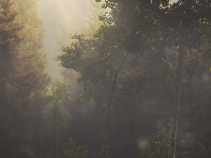 MOUNTAIN HIKE TREES