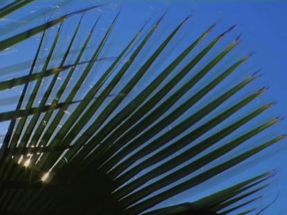 PALM LEAF SUNSHINE