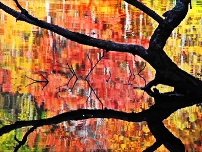 AUTUMN LAKE SUNKEN TREE
