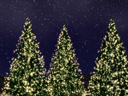 CHRISTMAS TREE REVOLUTION