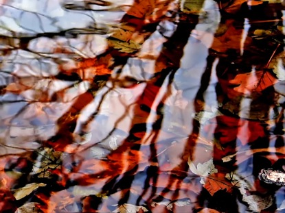 FALL LEAVES AND BRANCHES REFLECTION
