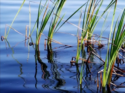 REEDS AND WAVES