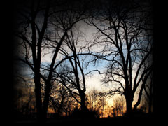 BARE TREES AUTUMN SUNSET