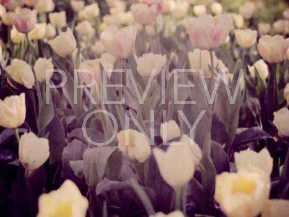 SPRING FLOWERS 6