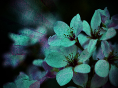 SPRING PURPLE FLOWER