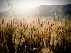 TALL GRASS 2