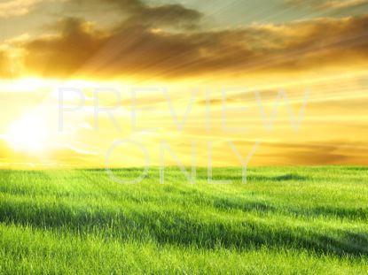 GOLDEN SUNRISE