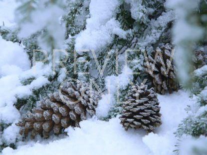 MERRY LITTLE CHRISTMAS STILL