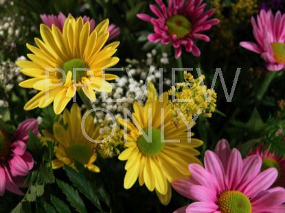 MOTHER'S DAY DAISY BOUQUET