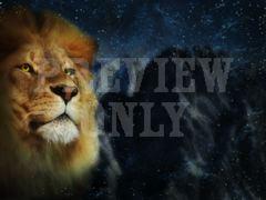 LION FACE CLOSE