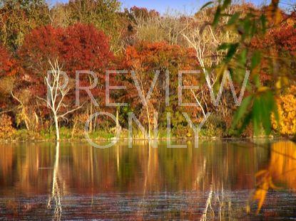 FALL FOOTAGE AUTUMN LAKE